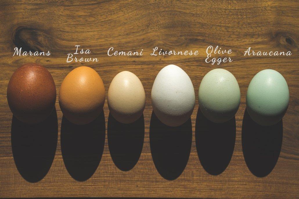 Uova colorate del Rapace di Beano